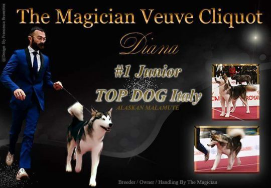 DIANA - The Magician Kennel